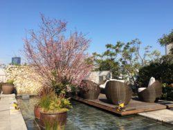 """代官山で一足早いお花見を!""""SAKURA""""がテーマの お料理&カクテルをXEX DAIKANYAMAにて3月10日提供開始 ..."""