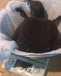 ペンギンのいるBAR池袋では、このたびペンギン夫婦が生んでいた卵がふ化し、子供が生まれたことをご報 ...